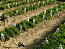 Organic farming Royalty Free Stock Photography
