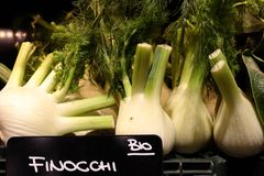 Organic fennel Stock Image