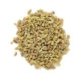Organic fennel (Foeniculum vulgare) in tea cut size. Royalty Free Stock Photography