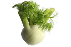 Organic fennel isolated on white. Royalty Free Stock Images