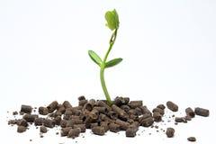 Organic fertilizer agriculture. Concept of agriculture using organic fertilizer Stock Photo
