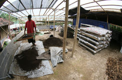 Organic fertilizer. Farmers make organic fertilizer from cow dung and dry leaves in Karanganyar, Central Java, Indonesia Stock Image