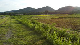 Organic field. In the northern of Thailand Stock Photography
