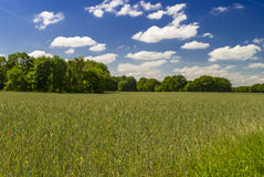 Organic Field. Photo of a field on a bright (spring) day with trees on the horizon - few clouds in the sky Royalty Free Stock Photo
