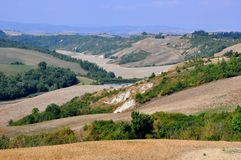 Organic fields in rural Tuscany , Italy  Stock Photos