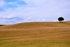 Organic fields in Tuscany , Italy Royalty Free Stock Photo