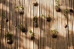Organic flower pots on wall from bamboo. Exterior shot of composed bamboo on wall with hanging flowerpots in sunlight stock photos