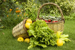 Organic food. Organic vegetables and fruits in the baskets standing on the grass Stock Images