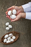 Organic food. Farmer with white cuffs showing eggs on his hands; hand made basket with multiple eggs below Stock Photos