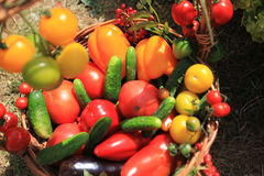 Organic food background Vegetables in the basket Royalty Free Stock Photography