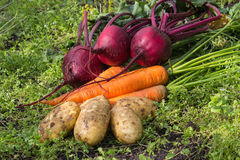 Organic food. Composition from fresh-gathered vegetables outdoors Royalty Free Stock Photography