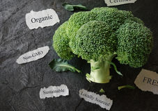 Organic food concept Royalty Free Stock Photography