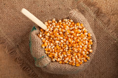 Organic food: corn in jute sack Royalty Free Stock Photography
