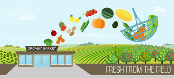 Organic food delivery. Organic market concept. Vector illustration of a store with a basket of organic vegetables and fruits. Delivery of natural products from royalty free illustration