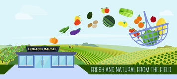Organic food delivery. Organic market concept. Vector illustration of a store with a basket of organic vegetables and fruits. Delivery of natural products from stock illustration