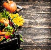 Organic food. Fresh harvest of vegetables. Royalty Free Stock Image