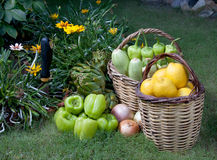 Organic food in garden Stock Photos