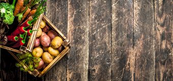 Organic food. Harvest of fresh vegetables in old boxes. Royalty Free Stock Photo