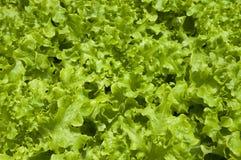 Organic food Royalty Free Stock Photo