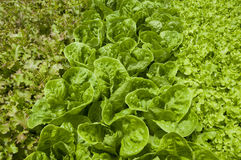 Organic food Royalty Free Stock Photos