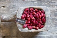 Organic food idea strawberry and a tag Stock Photo