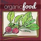Organic Food illustration Royalty Free Stock Photo
