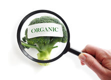 Organic food inspection royalty free stock photo