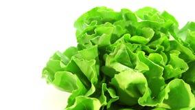 Organic food, lettuce stock video