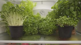 Organic food in refrigerator.