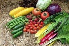 Organic Food. Shoot at Dalat, Viet Nam Stock Photos