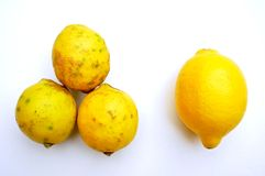 Organic food versus gmo food : lemons. healthy and unhealthy concept Royalty Free Stock Images