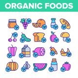 Organic Foods Vector Color Line Icons Set. Organic Foods Vector Thin Line Icons Set. Organic Food, Fresh Fruits, Berries, Vegetables Linear Pictograms. Healthy royalty free illustration