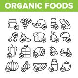 Organic Foods Vector Thin Line Icons Set. Organic Food, Fresh Fruits, Berries, Vegetables Linear Pictograms. Healthy Nutrition. Eco Dairy, Meat Products stock illustration