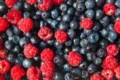 Organic Forest Fruit Stock Image