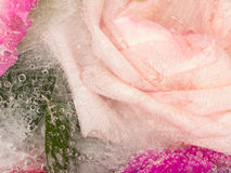 Organic fragrant pink abstraction Stock Images