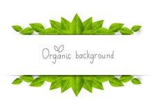 Organic frame Stock Image