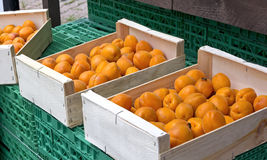 Organic and fresh apricots Stock Images
