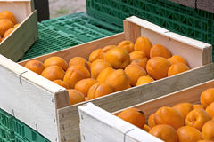 Organic and fresh apricots Stock Photo