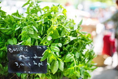 Organic fresh basil from mediterranean farmers market in Provenc Stock Image
