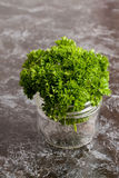 Organic fresh bunch of parsley in a glass jar Stock Images