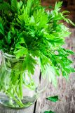 Organic fresh bunch of parsley in a glass jar closeup Stock Images