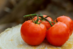 organic fresh cherry tomatoes on wooden background still life stock photography