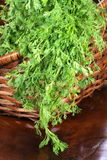 Organic fresh cilantro on basket Royalty Free Stock Photos
