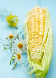 Organic fresh corn Royalty Free Stock Photo