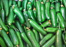 Organic Fresh Cucumbers Royalty Free Stock Photos