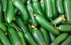 Organic Fresh Cucumbers Royalty Free Stock Photography