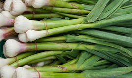 Organic Fresh Garlic Royalty Free Stock Image