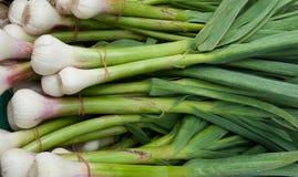 Organic Fresh Garlic Royalty Free Stock Image