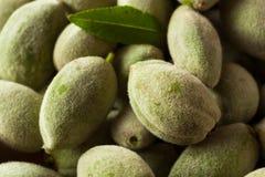 Organic Fresh Green Almonds Stock Photo