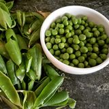 Organic fresh green peas Stock Images